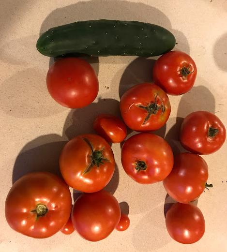 丰收时节 | Harvesttime